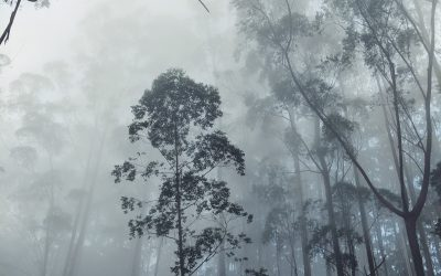Winter(ish) in the Blue Mountains – James Roy
